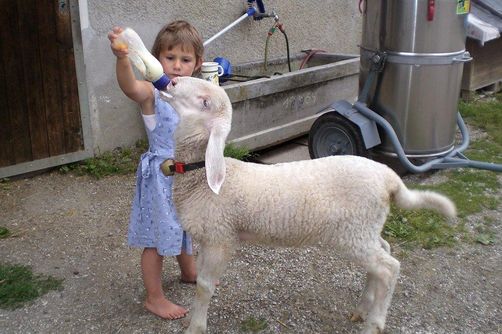 Ein erlebnisreicher Kinderurlaub auf dem Bauernhof